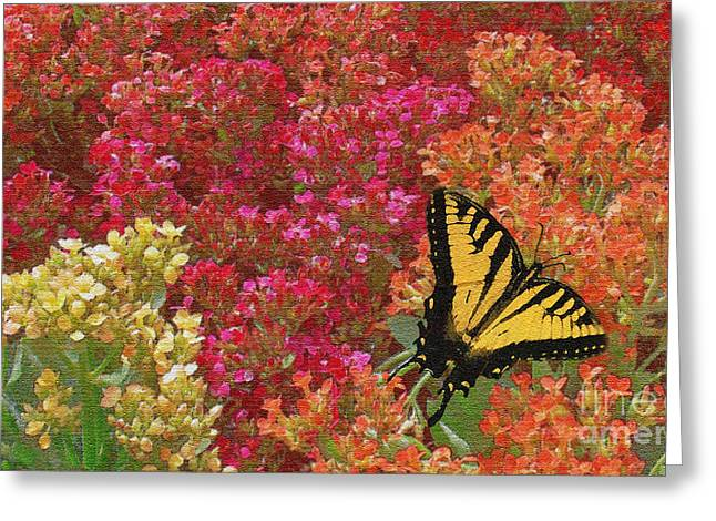 Butterfly Feeding Greeting Card by Sabrina K Wheeler