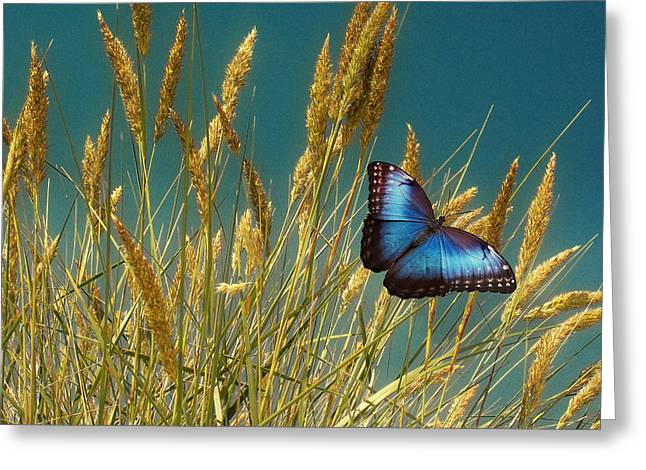 Butterfly Fields Of Grain Blue Greeting Card by David Dehner