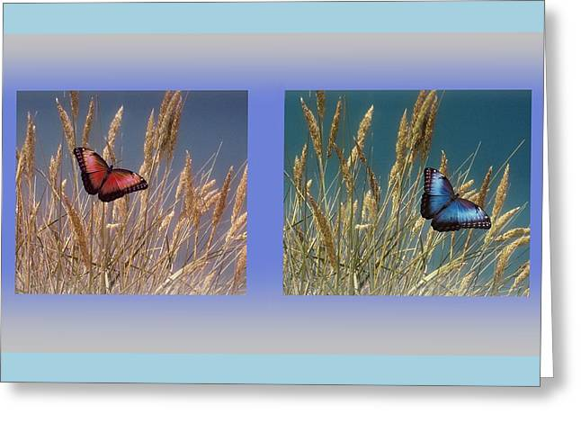 Butterfly Fields Of Grain Greeting Card by David Dehner