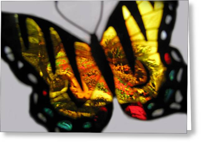 Photos Of Autumn Mixed Media Greeting Cards - Butterfly Floral Collection  Greeting Card by Debra     Vatalaro