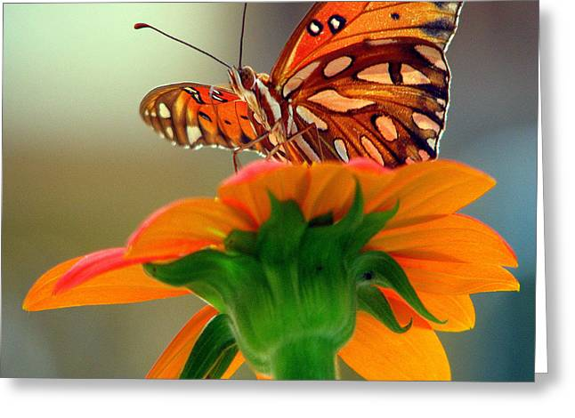 Butterfly Flower Greeting Card by Dottie Dees