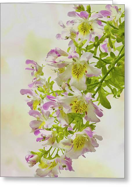 Butterfly Flowers  Greeting Card by Sandra Foster