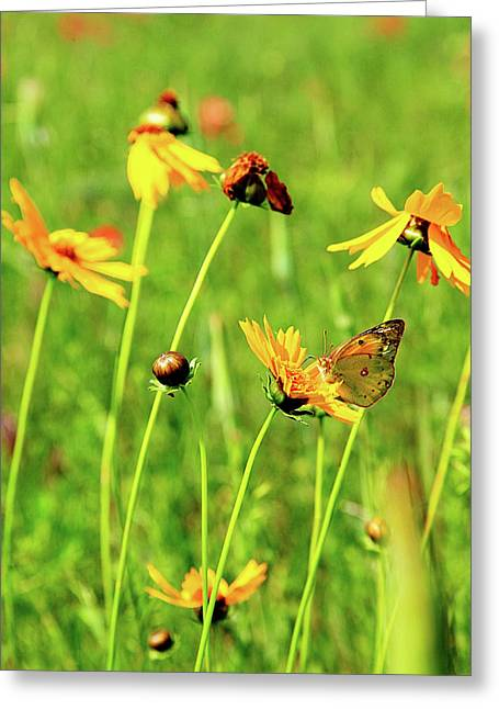 Butterfly Freedom Greeting Card by Toni Hopper