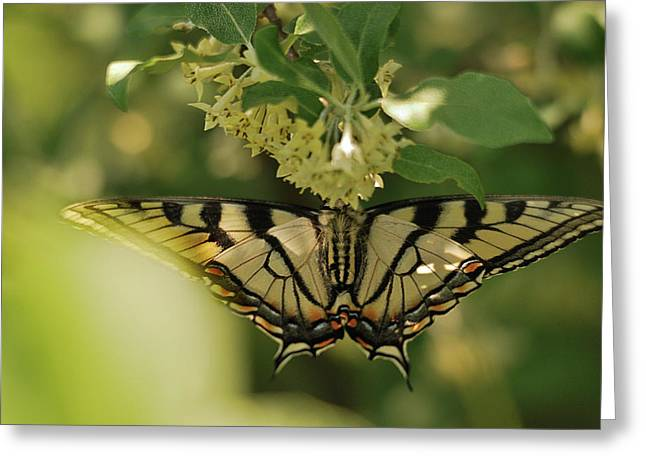 Greeting Card featuring the photograph Butterfly From Another Side by Susan Capuano