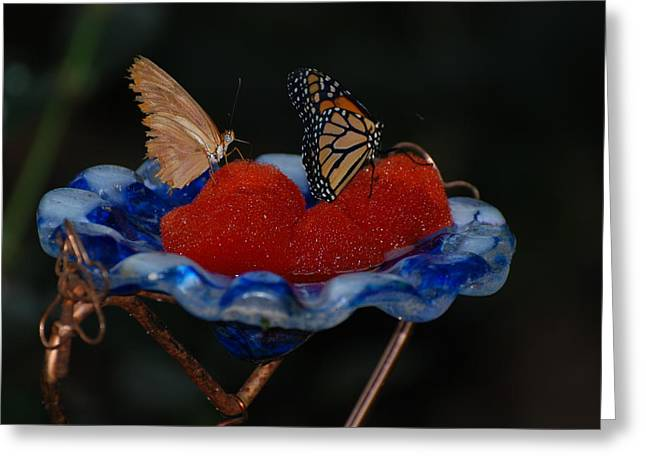 Greeting Card featuring the photograph Butterfly Fruit by Richard Bryce and Family