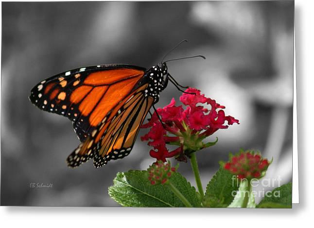 Butterfly Garden 01 - Monarch Greeting Card