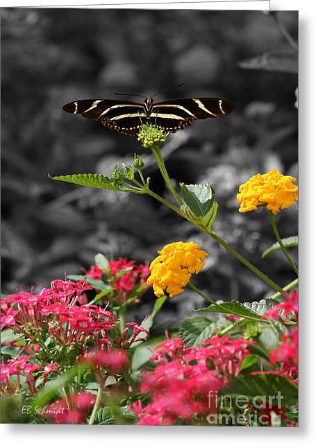 Greeting Card featuring the photograph Butterfly Garden 05 - Zebra Heliconian by E B Schmidt