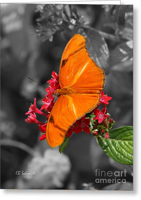 Greeting Card featuring the photograph Butterfly Garden 16 - Julia Heliconian by E B Schmidt
