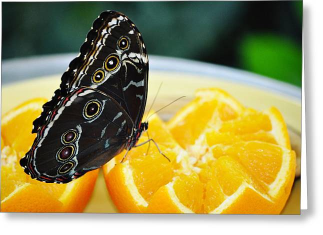 Butterfly Haven Citrus Greeting Card