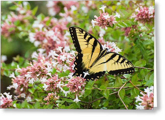 Greeting Card featuring the photograph Butterfly Haven by Julie Andel
