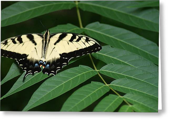Butterfly Greeting Card by Heather Green