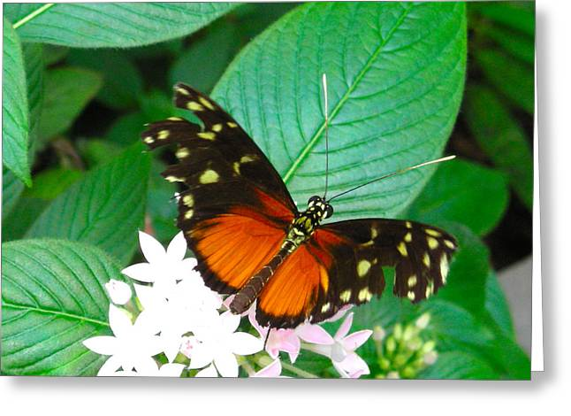 Butterfly House  Greeting Card