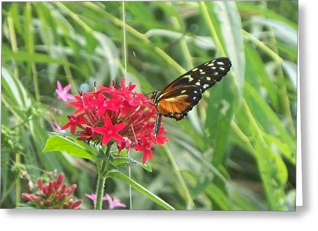 butterfly II Greeting Card by Rosanne Bartlett