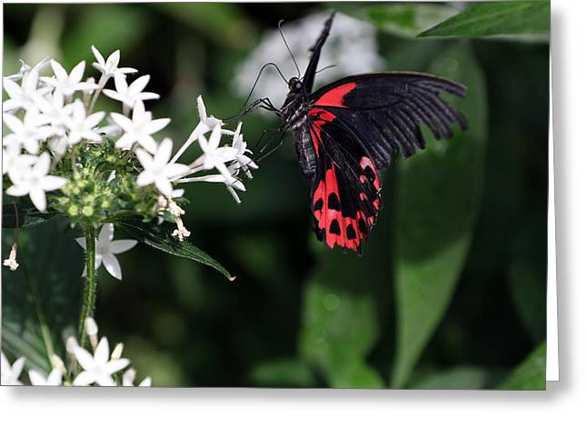 Butterfly IIi Greeting Card by David Yunker