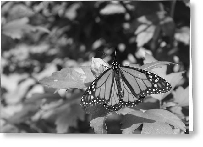 Butterfly In Black And White Greeting Card by Allison Whitener