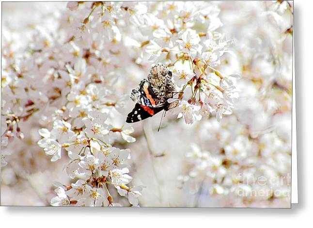 Greeting Card featuring the photograph Butterfly In Cherry Blossom by Charline Xia