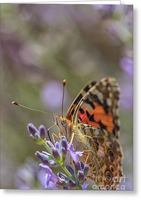 Greeting Card featuring the photograph Butterfly In Close Up by Patricia Hofmeester