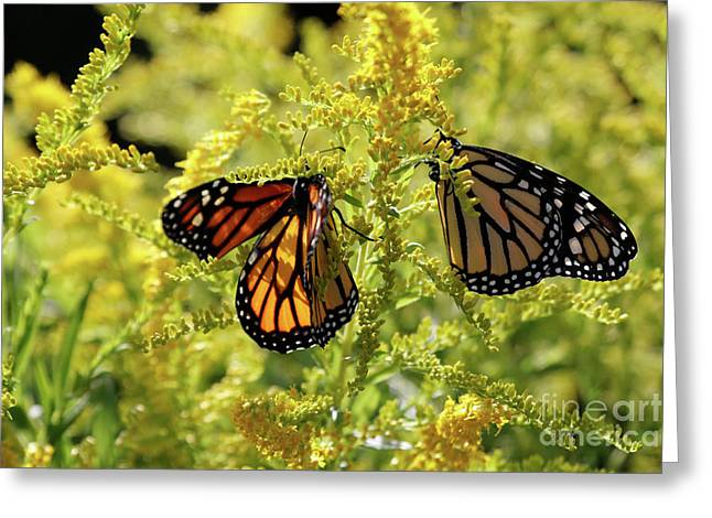 Butterfly In Fall  Greeting Card
