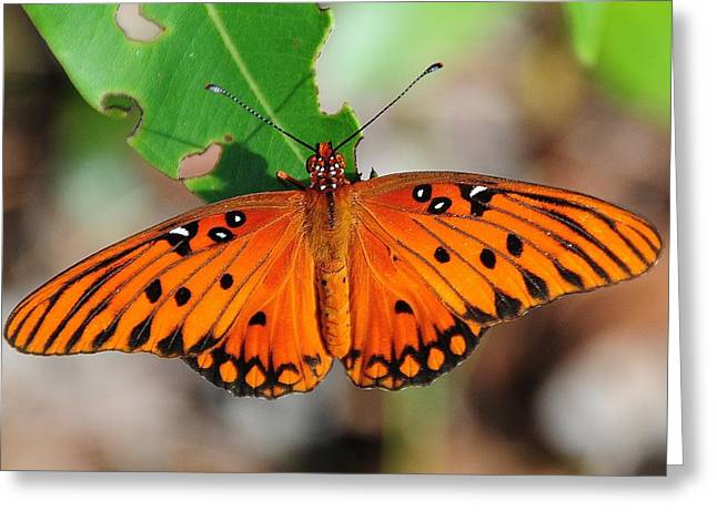 Butterfly In Feast Greeting Card