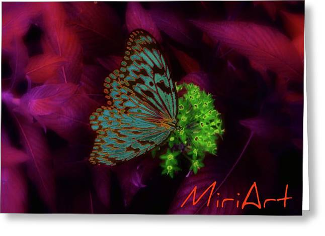 Greeting Card featuring the photograph Butterfly In Fusia by Miriam Shaw