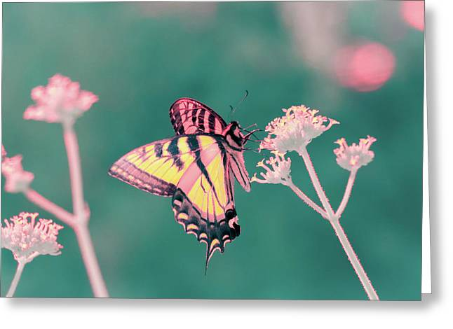Greeting Card featuring the photograph Butterfly In Infrared by Brian Hale