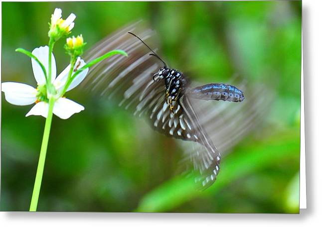 Butterfly In Motion Greeting Card by Shawn  Miller