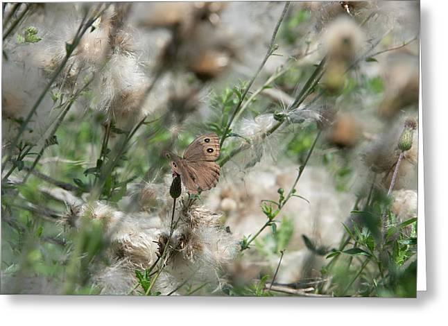 Butterfly In Puffy Seed Heads Greeting Card