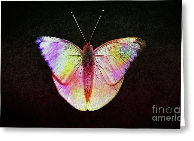 Butterfly In Retro  Greeting Card
