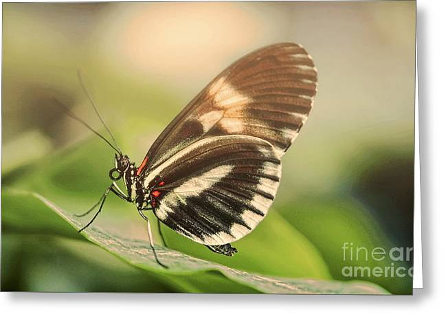 Butterfly In The Fog Greeting Card