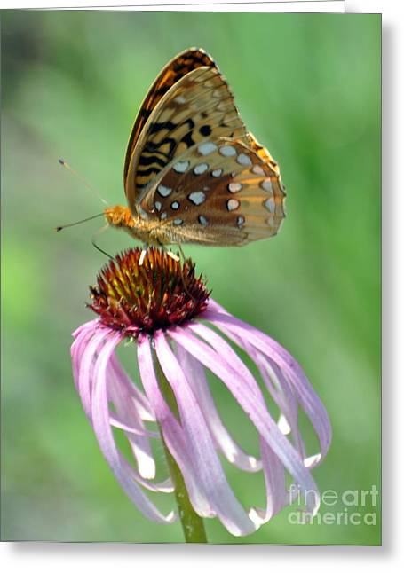 Butterfly In The Wind Greeting Card by Marty Koch