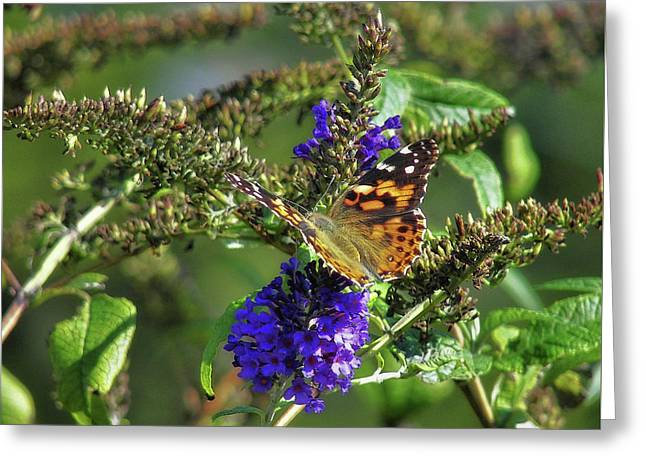 Butterfly Joy Greeting Card by JAMART Photography