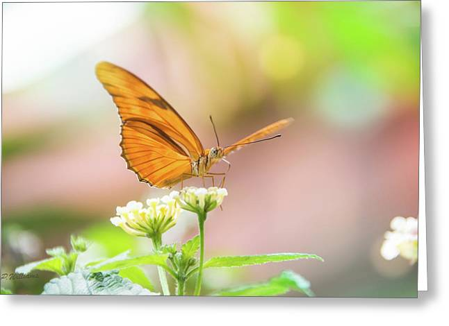 Butterfly - Julie Heliconian Greeting Card by Pamela Williams