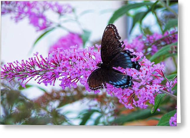 Butterfly Kisses Greeting Card by JAMART Photography
