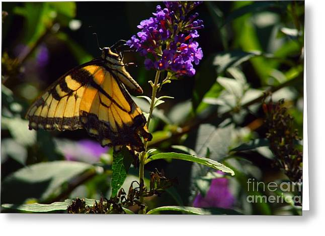 Butterfly Kisses Greeting Card by Robyn King