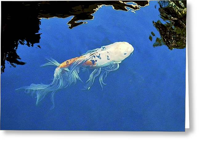 Butterfly Koi In Blue Sky Reflection Greeting Card