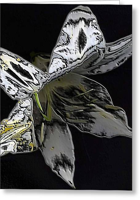 Greeting Card featuring the photograph Butterfly Lily by Carolyn Repka