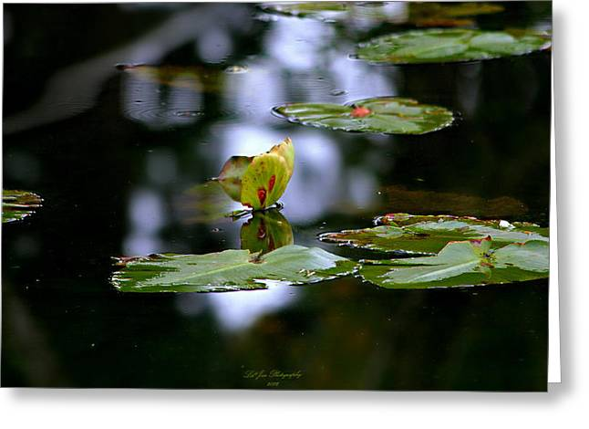 Butterfly Lily Pad Greeting Card