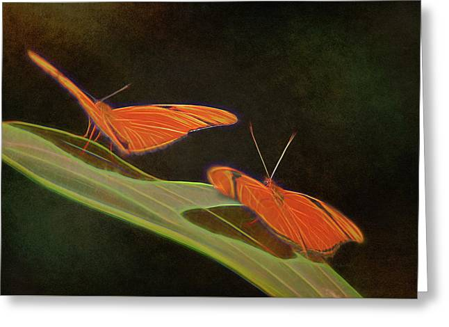 Butterfly Love 1a Greeting Card