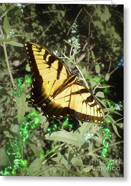 Butterfly Magic Greeting Card