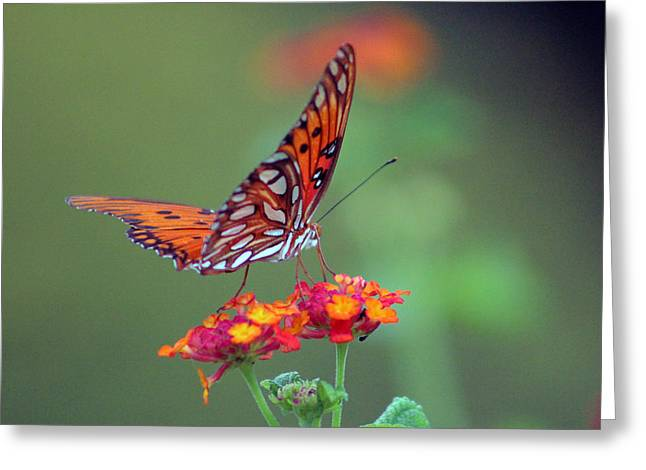 Butterfly Majestic Greeting Card