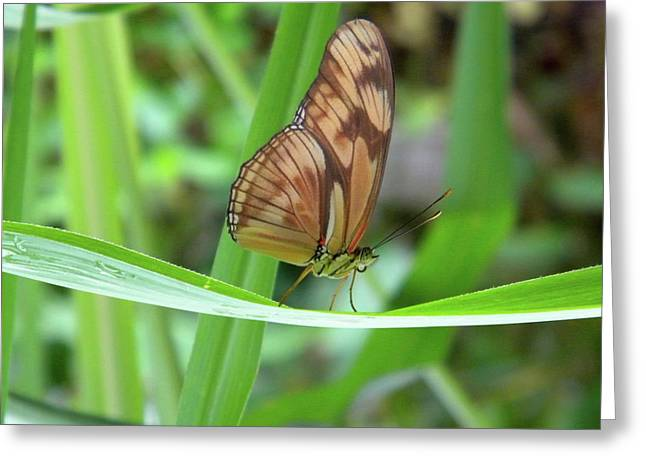Greeting Card featuring the photograph Butterfly by Manuela Constantin