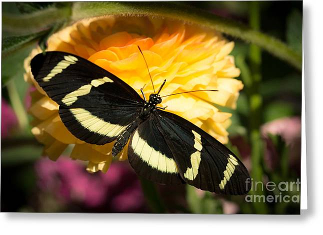 Butterfly Moment Greeting Card by Ana V Ramirez