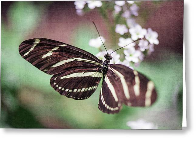 Butterfly Greeting Card by Nastasia Cook