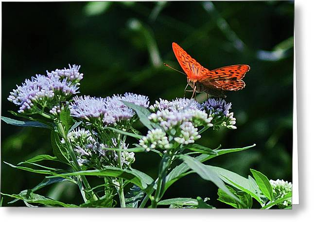 Butterfly On A Flower 2 Greeting Card by Anton Popov