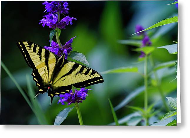 Butterfly On A Purple Flower Greeting Card