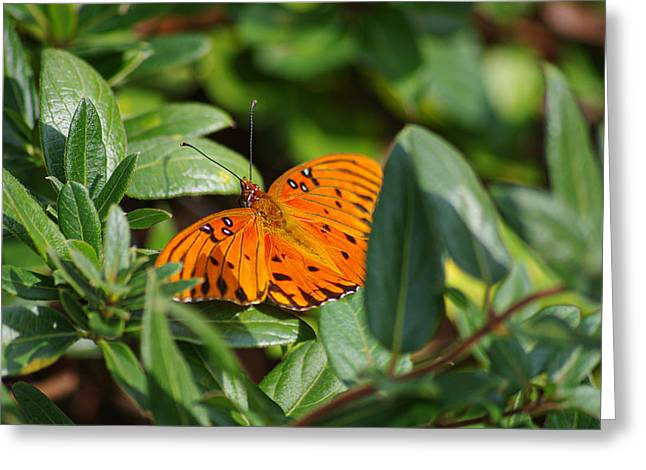 Butterfly On A Sunny Day Greeting Card