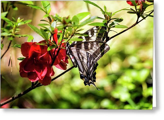 Butterfly On An Azalea Greeting Card