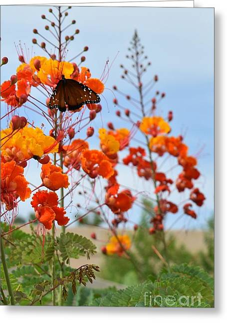 Butterfly On Bird Of Paradise Greeting Card