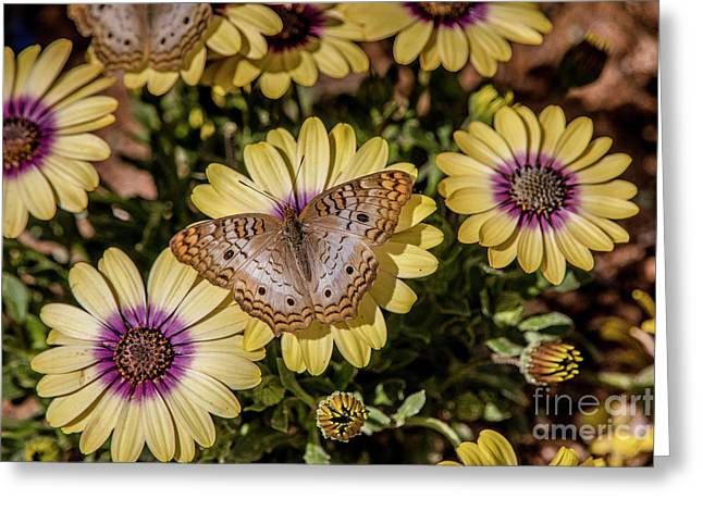 Butterfly On Blossoms Greeting Card