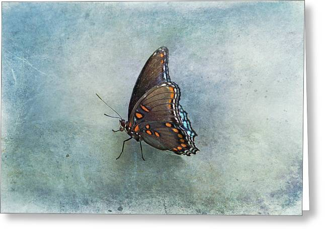Greeting Card featuring the photograph Butterfly On Blue by Sandy Keeton